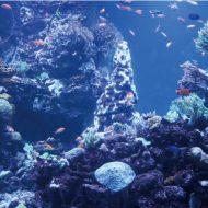 SNS映え間違いなし! リニューアルしたサンシャイン水族館、SKY CIRCUS サンシャイン60展望台に 行ってきたよ!! 3月1日から3月30日の平日は学割キャンペーン開催!